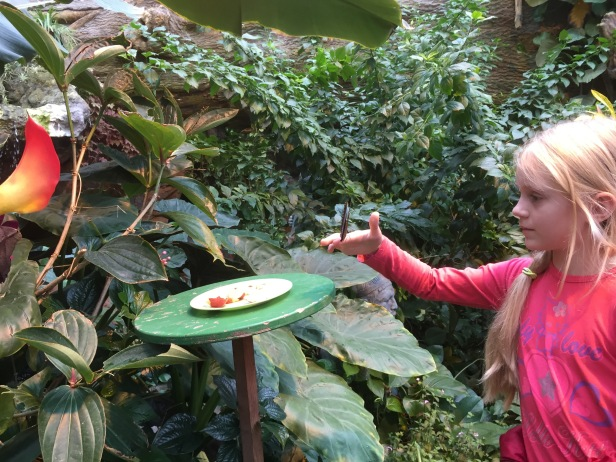 You're not supposed to touch the butterflies, but that didn't stop this little girl from getting one to sit on her finger.