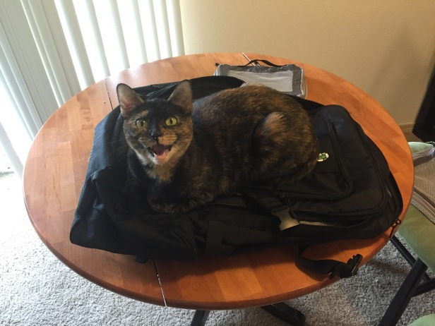cat laying on travel backpack